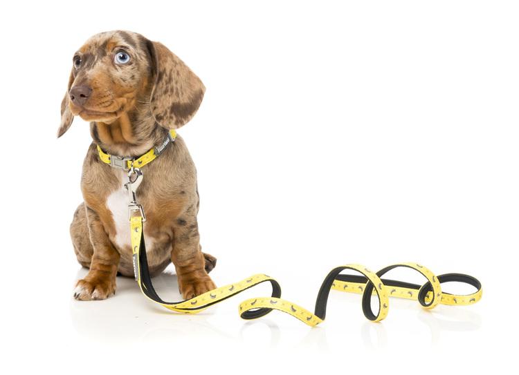 Led lampa för hund DogOn