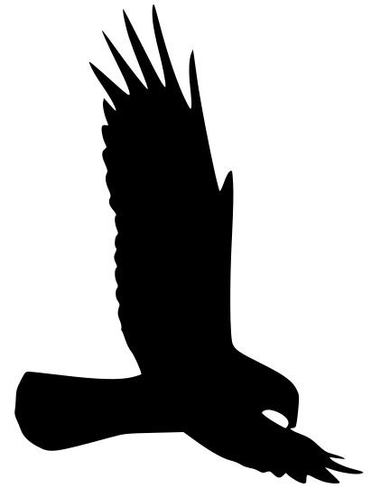 Dekor siluette av örn - Till fönster