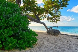 Palmträd längs strand