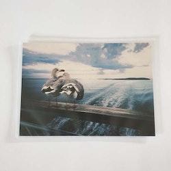 Promo Fiskmåsar / Seagulls