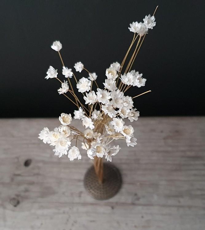 Blomsterfakir Liten