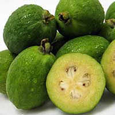 Ananasguava – Acca Sellowiana