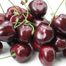 """Sötkörsbär """"Kordia"""" -  Prunus avium """"Kordia"""""""