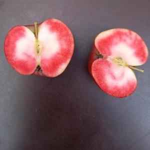 Äppelträd  'Dries'   - Malus niedzwetskyana 'Dries'