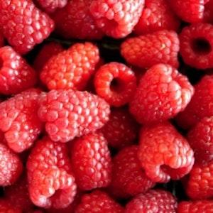 Trädgårdshallon  `Tulameen - Rubus ideaus `Tulameen