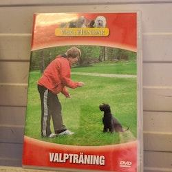 DVD: Valpträning