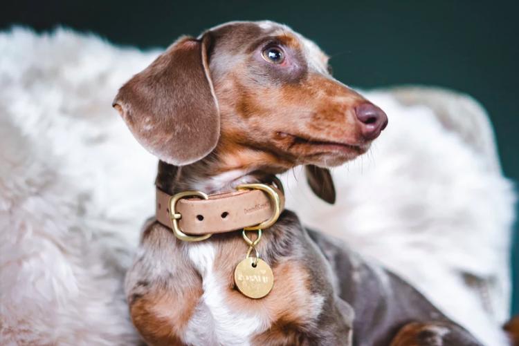 Hundhalsband i läder