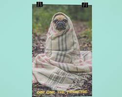 Obi One The Frenchie (txt) Poster