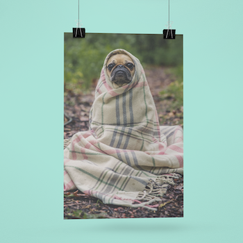 Obi One The Frenchie (notext) Poster