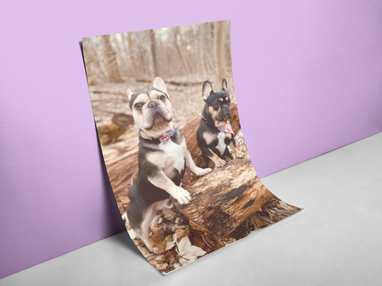 The Frenchie Twins Poster