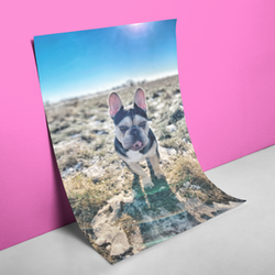 Frenchie The Explorer Poster