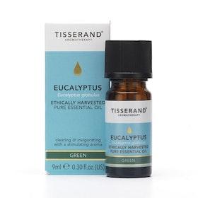 Eterisk olja Eucalypus Organic - Tisserand Aromatherapy