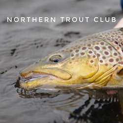 Northern Trout Club