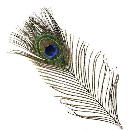 Peacock Eye - Påfågel ögonfjäder
