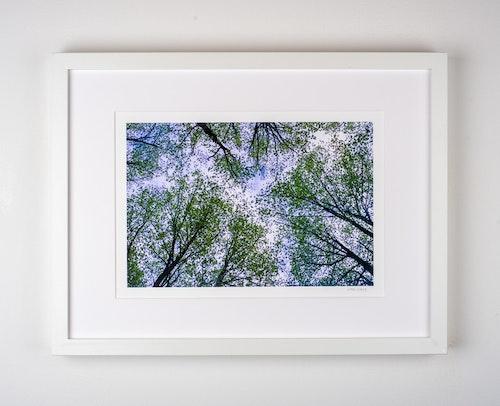 """""""träd"""" 4/25"""