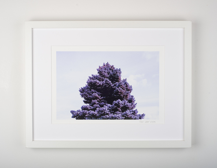 """purple tree"""