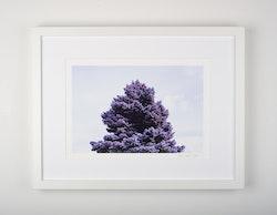 """""""purple tree"""""""