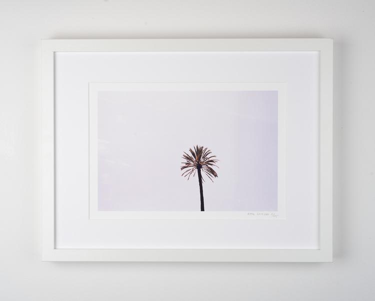 """""""suburra palm"""""""