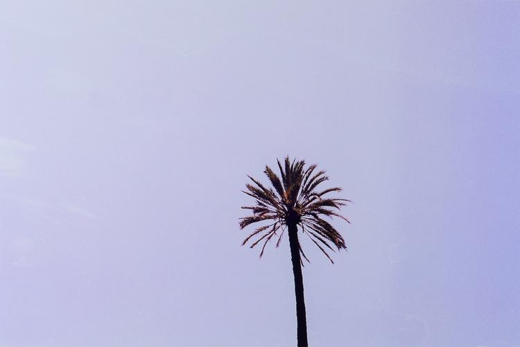 """suburra palm"" black frame"
