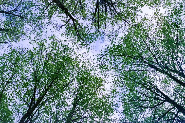 """""""träd"""""""
