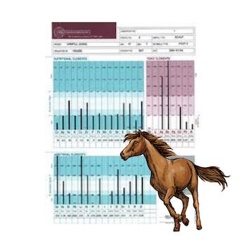 Hårmineralanalys Häst