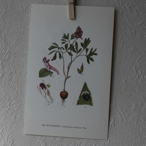Florabild - Nunneört