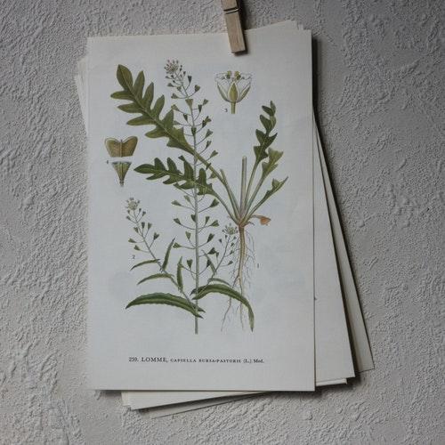 Florabild - Lomme