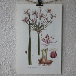 Florabild - Blomvass