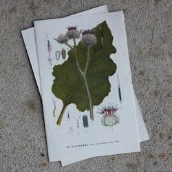 Florabild - Kardborre