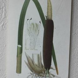 Florabild - Kaveldun