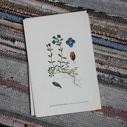 Florabild - Klippärenpris