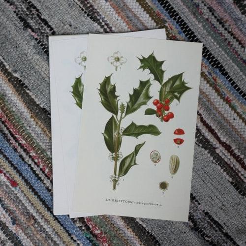 Florabild - Kristtorn