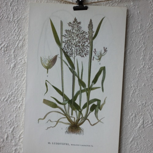 Florabild - Luddtåtel