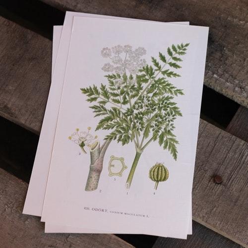 Florabild - Odört