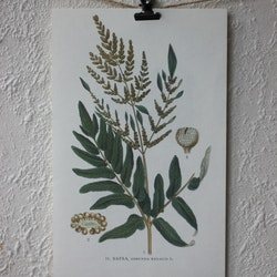 Florabild - Safsa