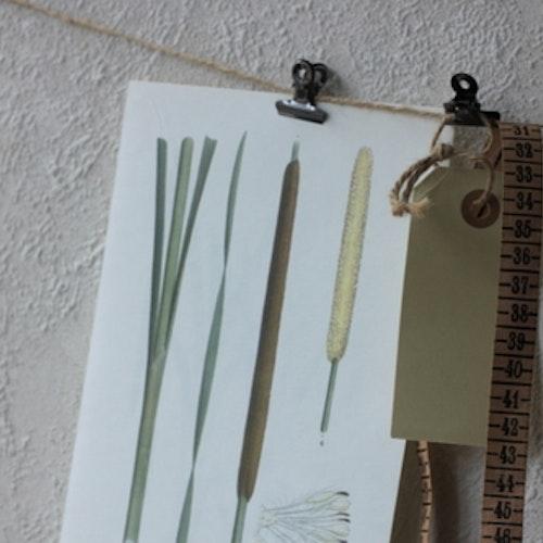 Florabild - Smalkaveldun