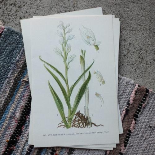 Florabild - Svärdsyssla