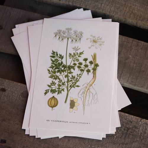 Florabild - Vildpersilja