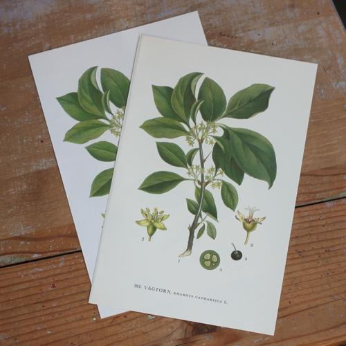 Florabild - Vägtorn
