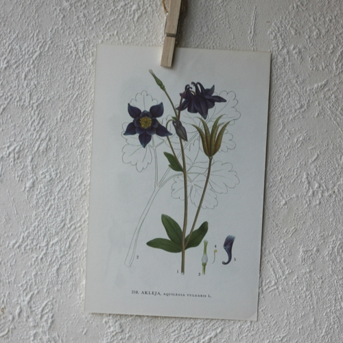 Florabild - Akleja
