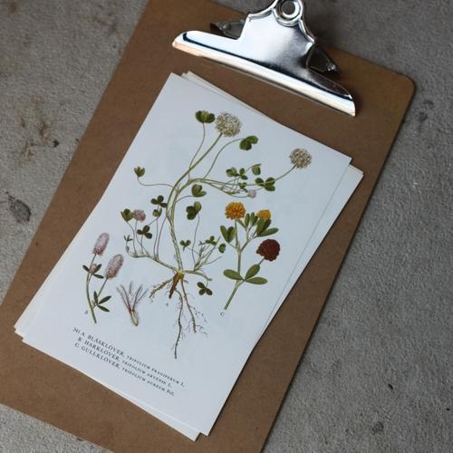 Florabild - Blåsklöver, Harklöver, Gullklöver