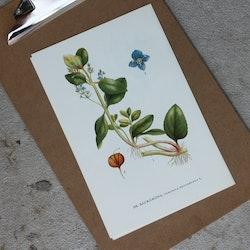 Florabild - Bäckgröna