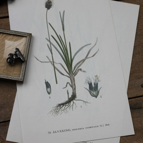 Florabild - Älväxing