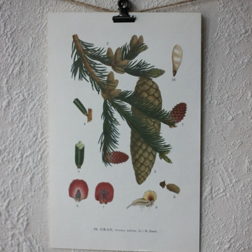 Florabild - Gran