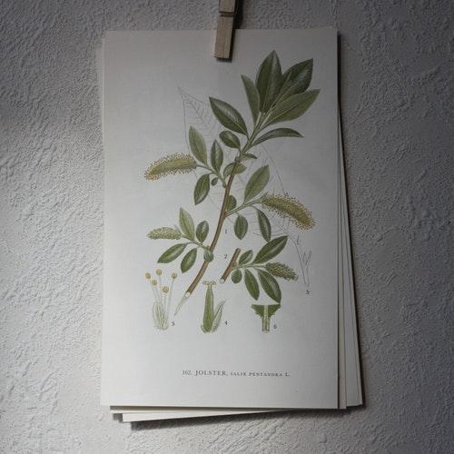 Florabild - Jolster