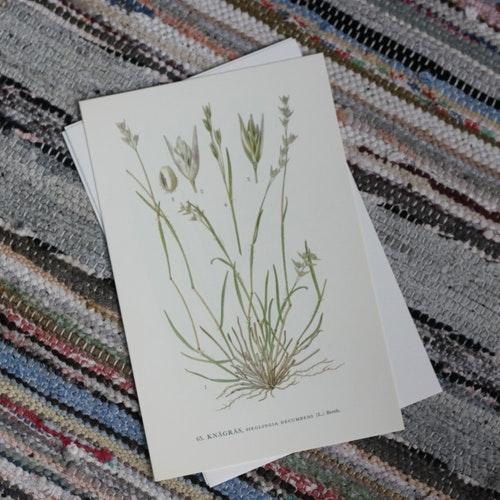 Florabild - Knägräs
