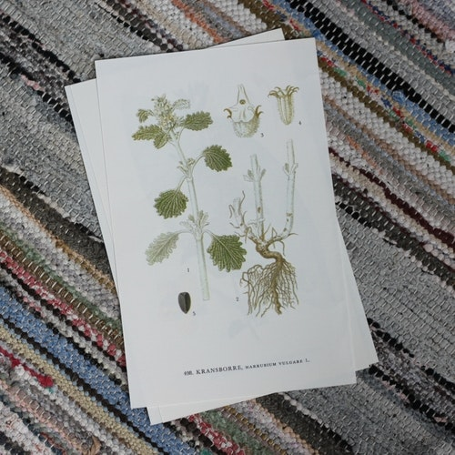 Florabild - Kransborre