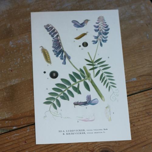 Florabild - Luddvicker