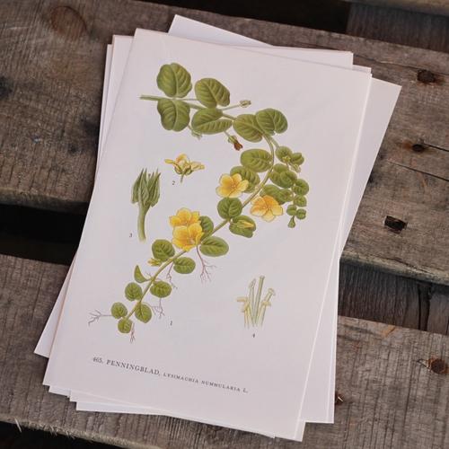 Florabild - Penningblad