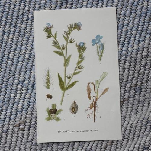 Florabild - Rast